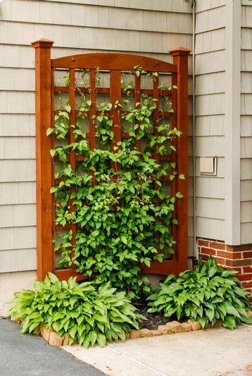 22 Best DIY Trellis Ideas - Easy Garden Trellis DIY Guid