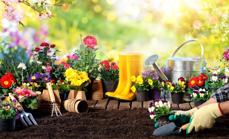 Top 5 Tips On How To Choose Tools For Gardening - Mipp