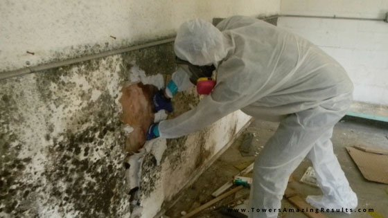 The Danger of Mold in Your Home | Towers Restoration & Cleani
