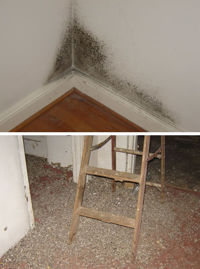 Charlottesville Mold Testing: How To Prevent Mold Growing In Your Ho