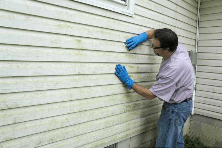 Why Does Mildew Grow on Vinyl Siding? | Gold Eagle