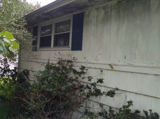 How do I prevent mold on the outside of   my home?