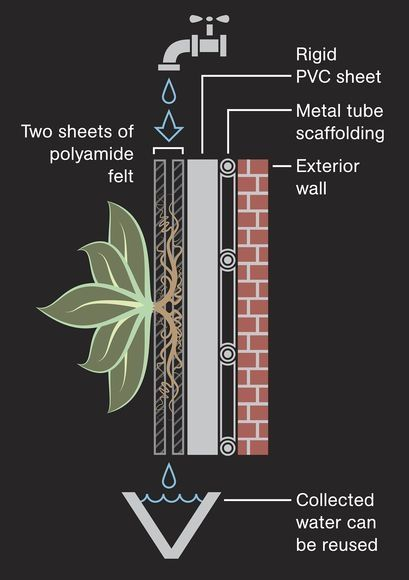 How do living walls work?