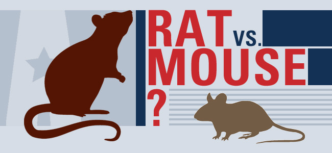 How To Tell If You Have Mice Or Ra