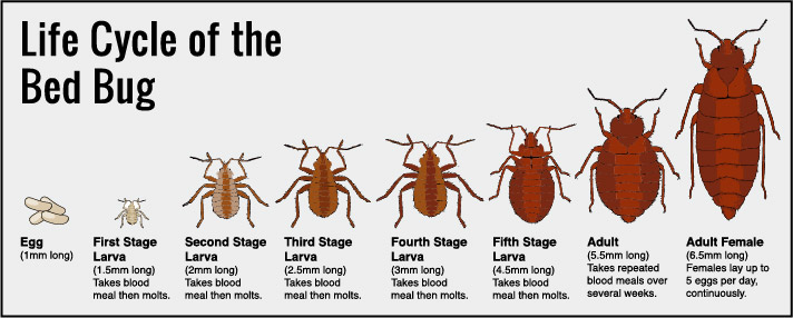 How To Detect, Resolve And Prevent Problems With A Bed Bug .