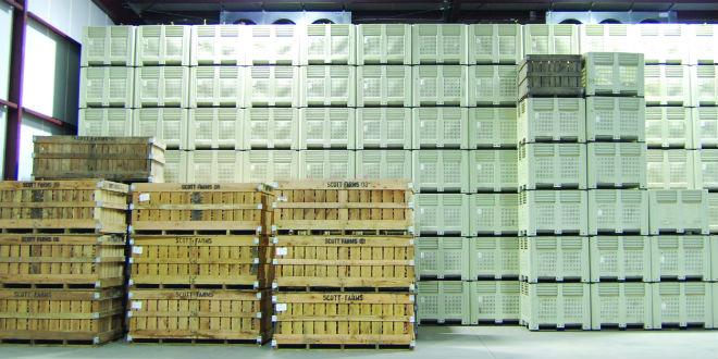 Storage techniques transform vegetable industry - Vegetable .