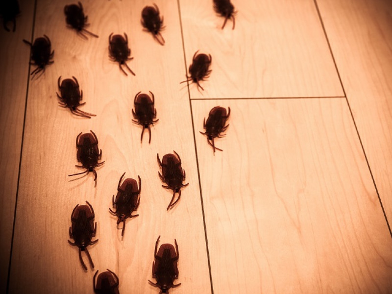 How the weather affects pests in your   home