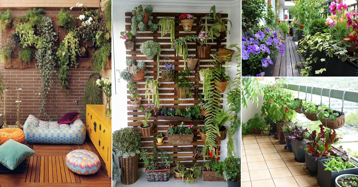 How to create a garden on your balcony or   terrace