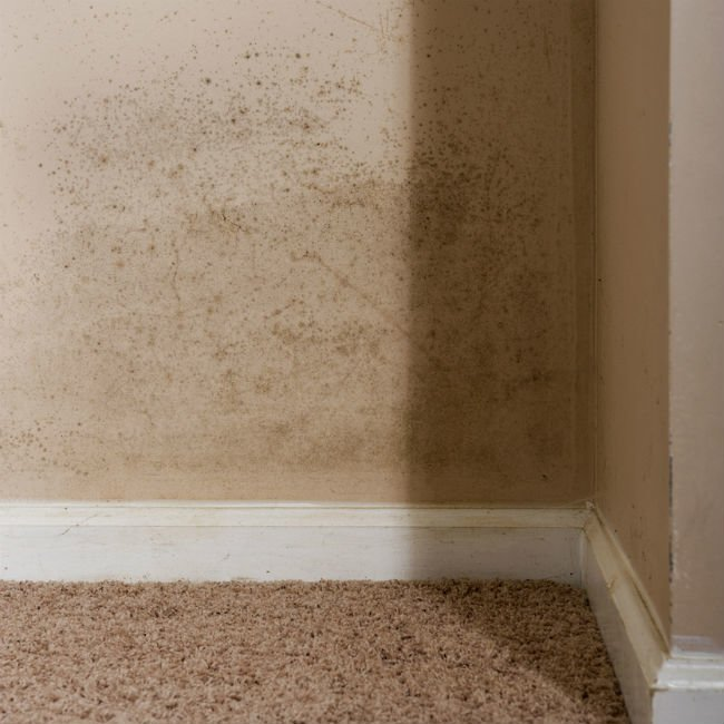 Mold on the Walls? How to Kill It and Clean Up the Stains | Bob Vi