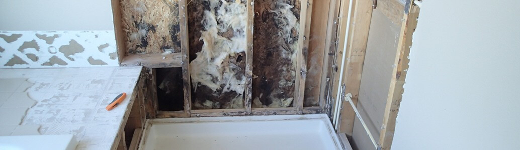 Mold in the shower | Causes & How to Clean It - Environ