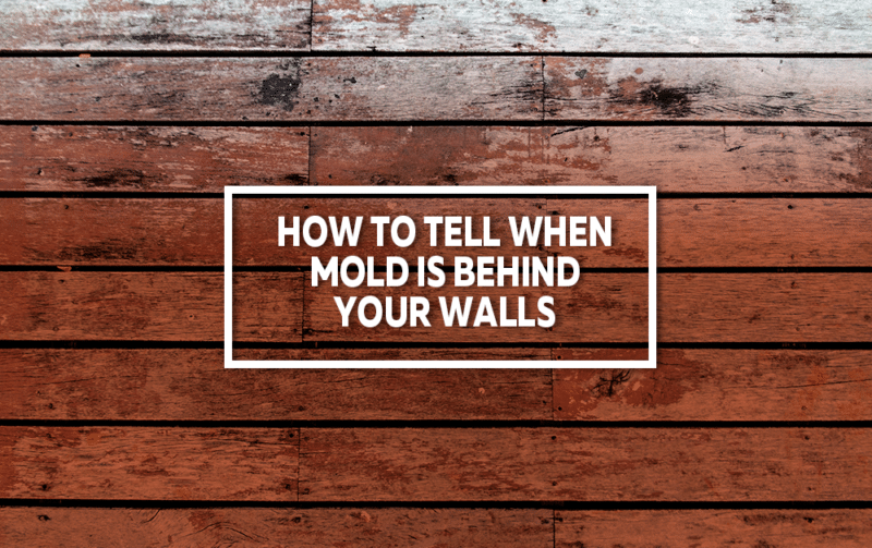 How To Tell When Mold Is Behind Your Walls – Total Care Restorati
