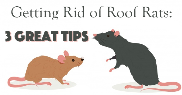 Getting Rid of Roof Rats: 3 Great Tips - The Bug Master Pest .