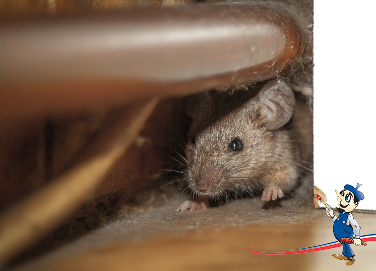 Roof rats are a hazardous problem – get rid of the