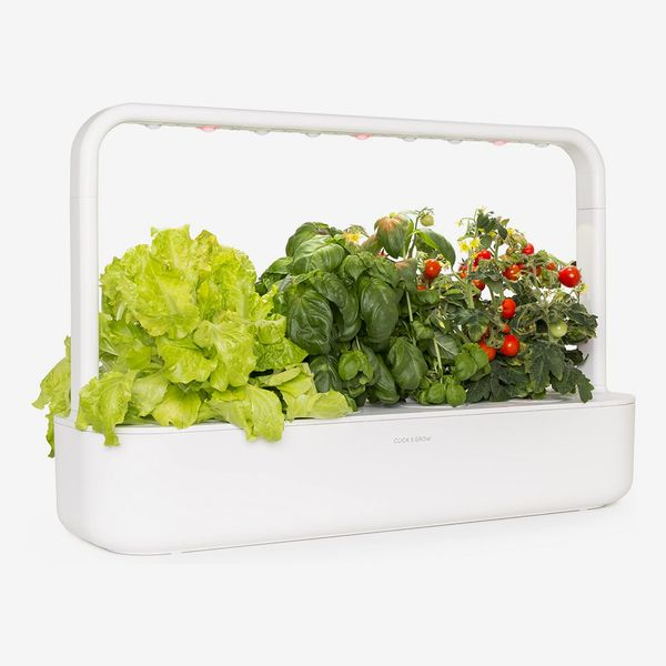 15 Best Indoor Garden Kits: 2020 | The Strategist | New York Magazi