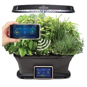 "How to grow herbs at home with   ""smart"" grow boxes"