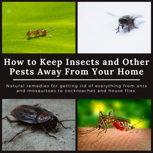 Home Remedies to Keep Cockroaches, Lizards, Ants, Mosquitoes, Bed .