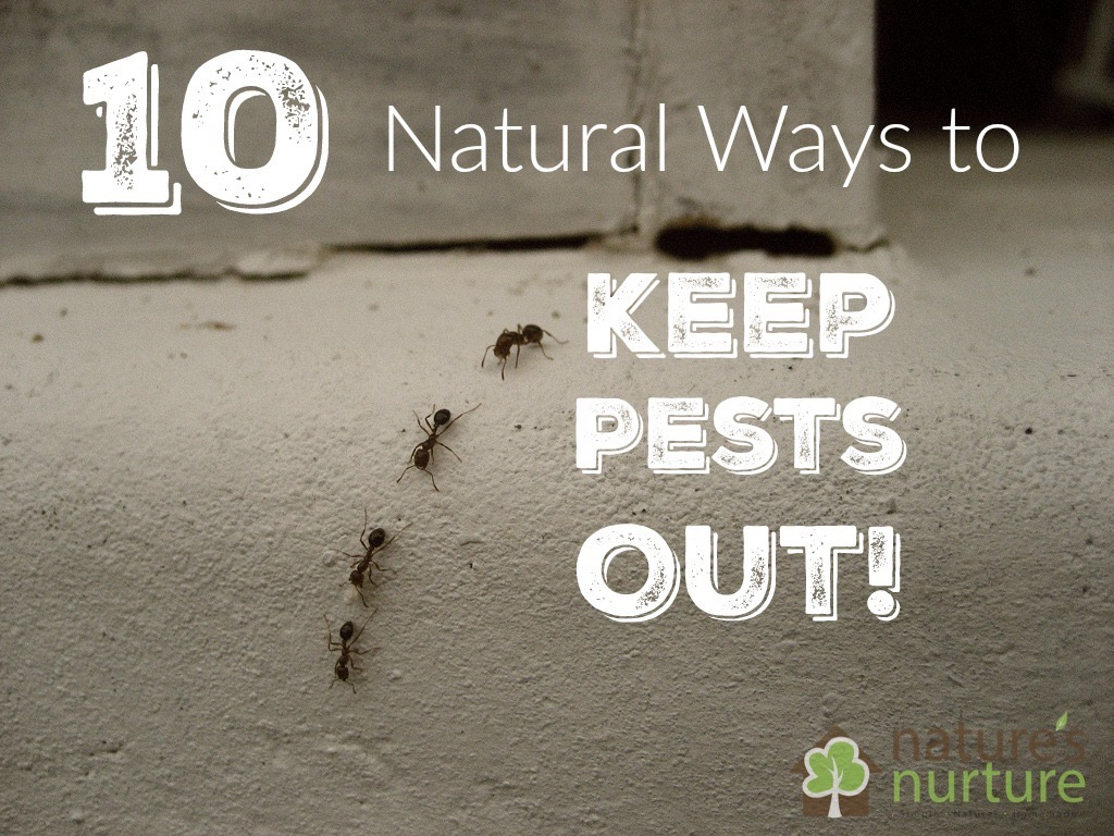 How to keep pests away from your property