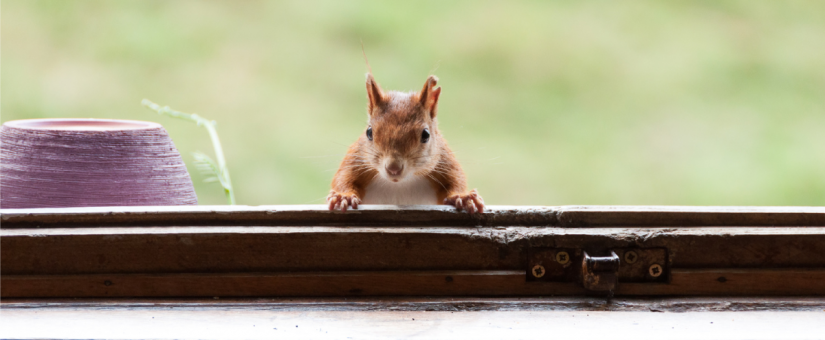 Keep Pests Out of Your Home, Secure Your HVAC System - Team Hardi