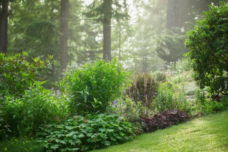 How to Get Free Plants for Your Gard