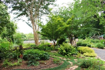 Pruning Trees & Shrubs in Your Landscape | North Carolina .