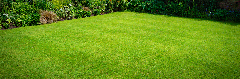 How to Achieve & Maintain a Great Looking Lawn - My Garden Expe