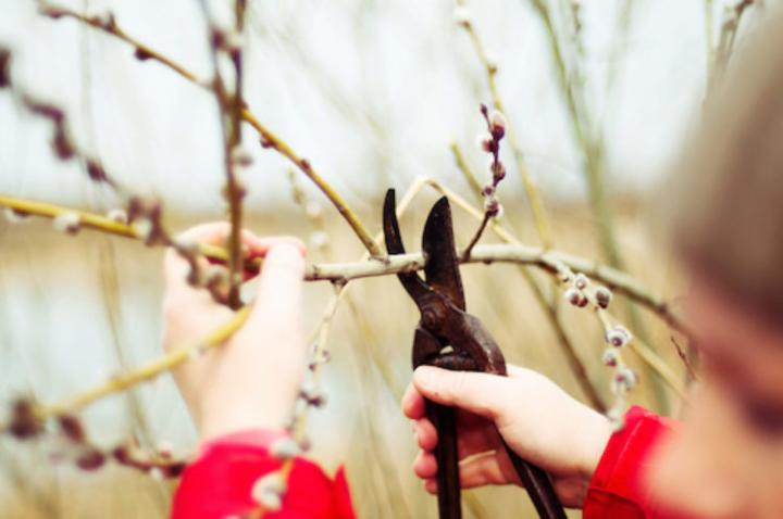 Winter Pruning Guide for Trees and Shrubs | The Old Farmer's Alman