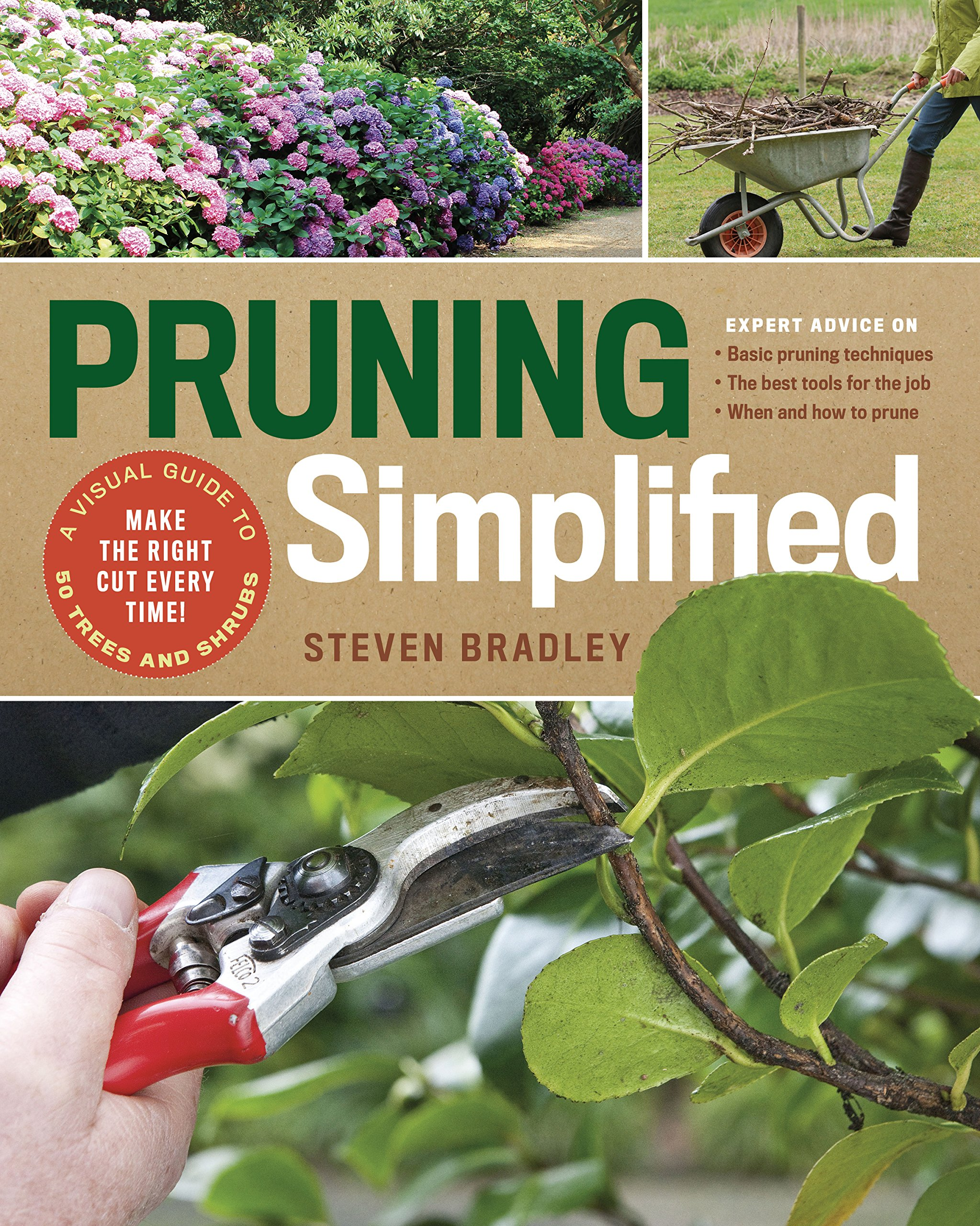 How to prune bushes and trees: a simple   guide