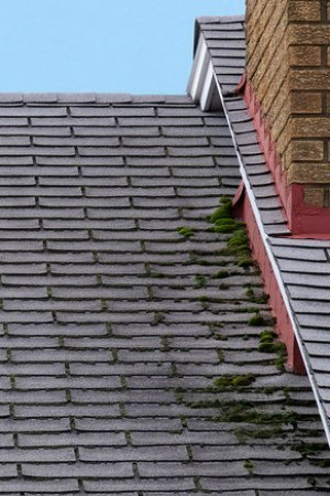 How to Remove Moss from Roof - Bob Vi