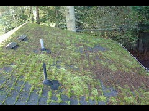 How to Remove Moss on Roof Fast ! Part 1 Before - YouTu