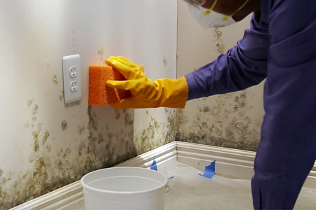 How to Remove Mold From Wall | DIY: True Value Projec