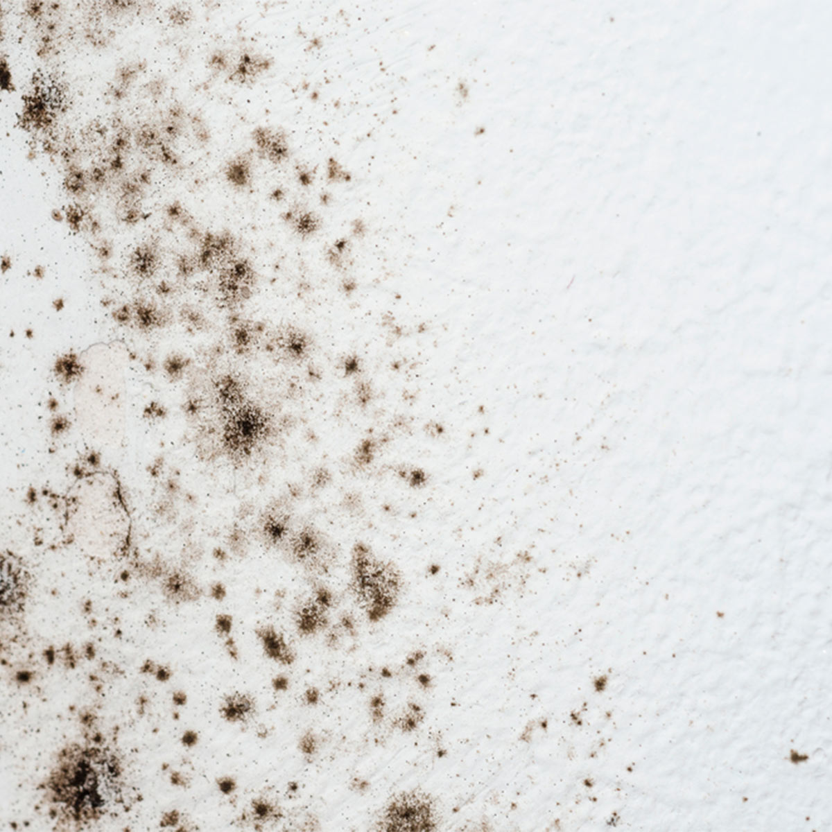 Mold Tips – Remove mold and mildew from   your walls