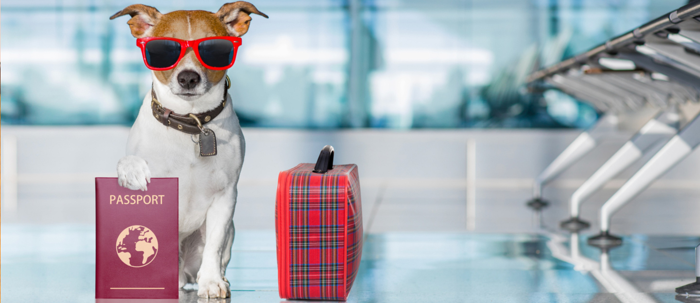 Moving A Pet: How To Make The Experience   Stress Free