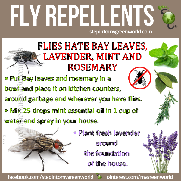 Natural Remedies | RAW FOR BEAUTY | Page 12 | Fly repellant .