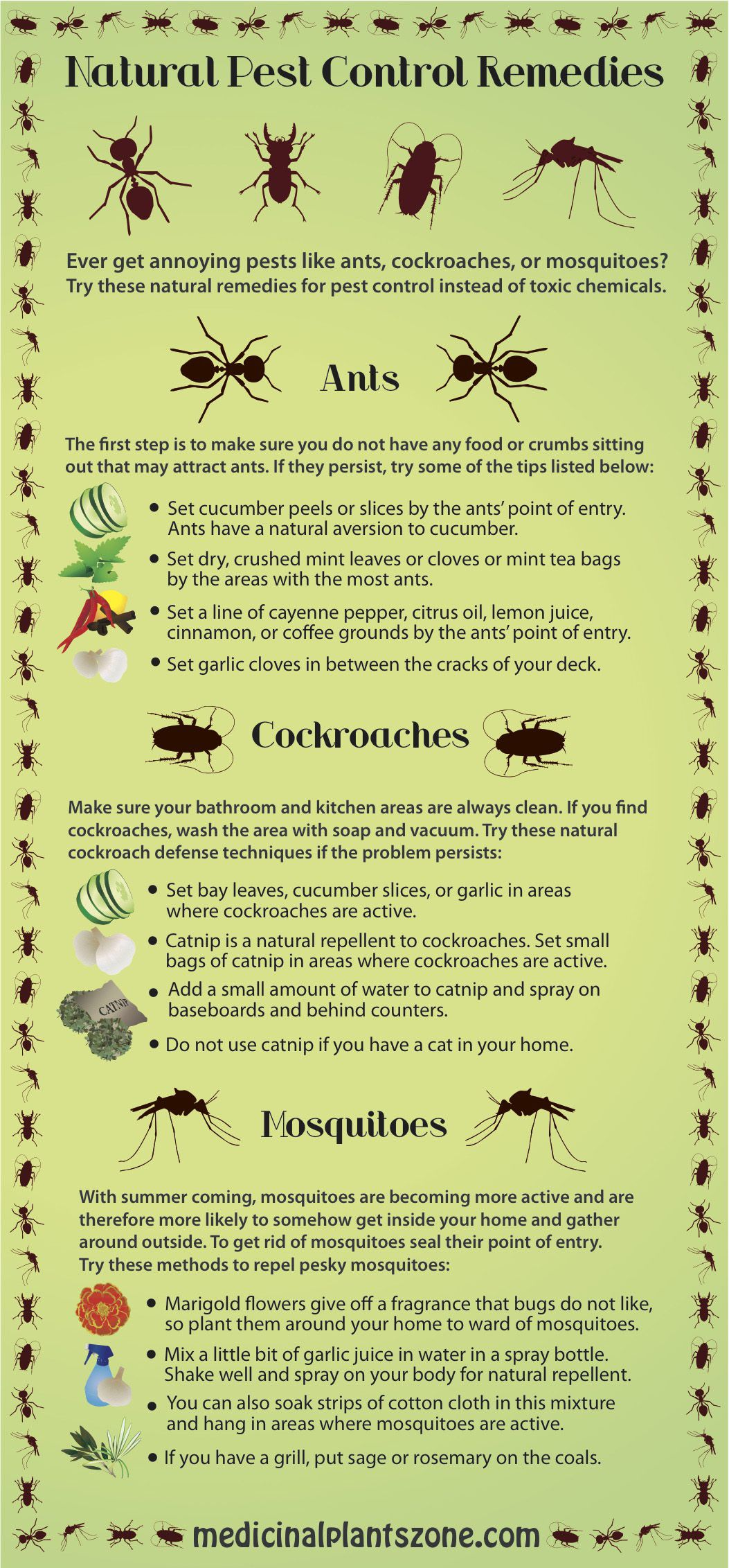 Natural Remedies For Pest Control At Home