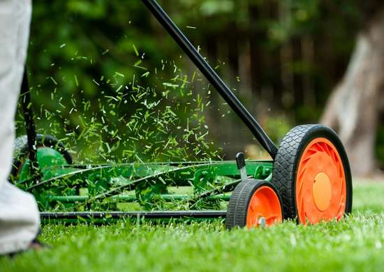 10 Times You Can Get Nature to Do Your Yard Work for You - Bob Vi