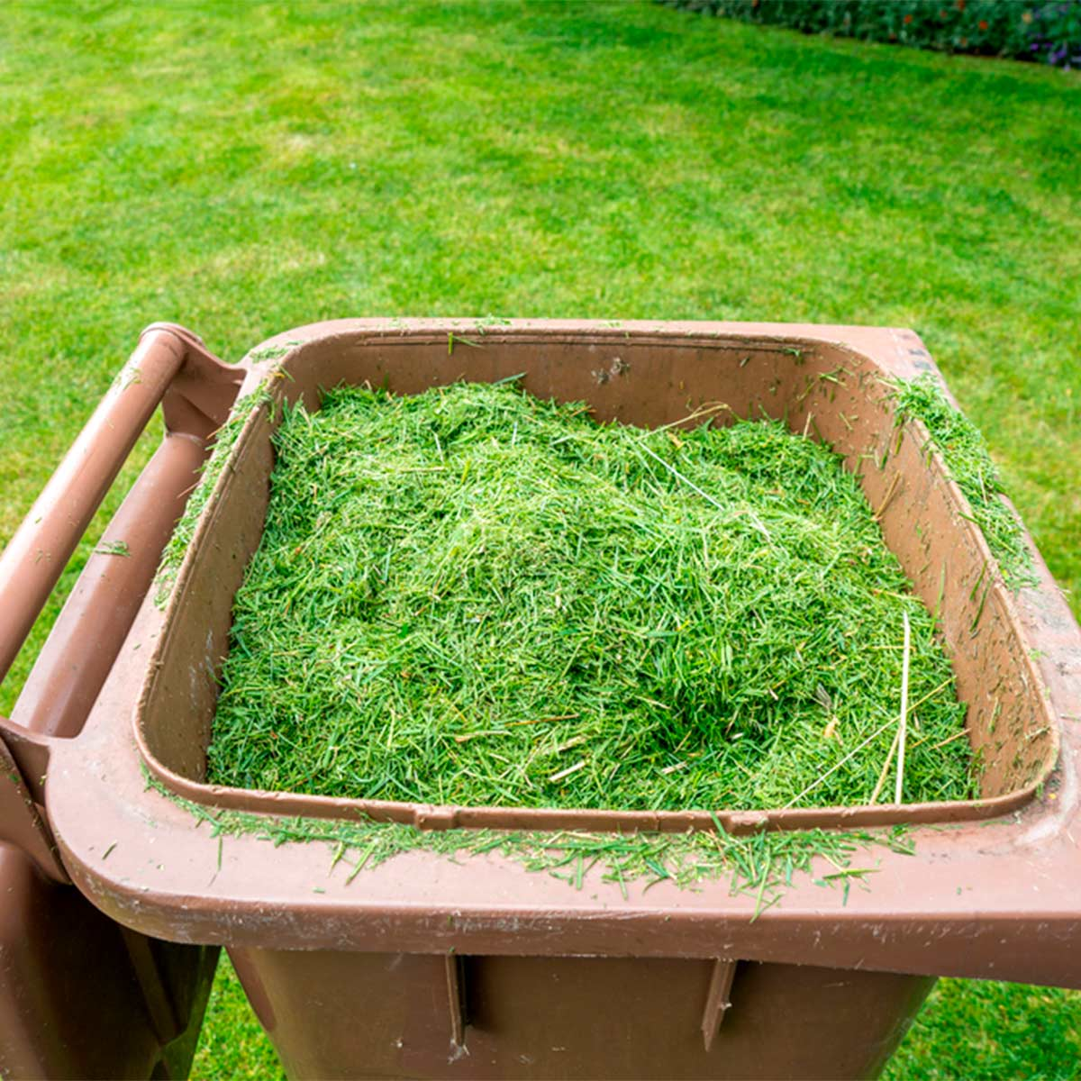 No green thumb? Three things you can do to still have a   great lawn