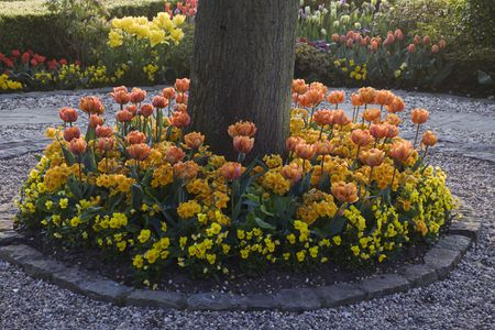 How Do You Plant Ground Cover or Flowers Under Tree