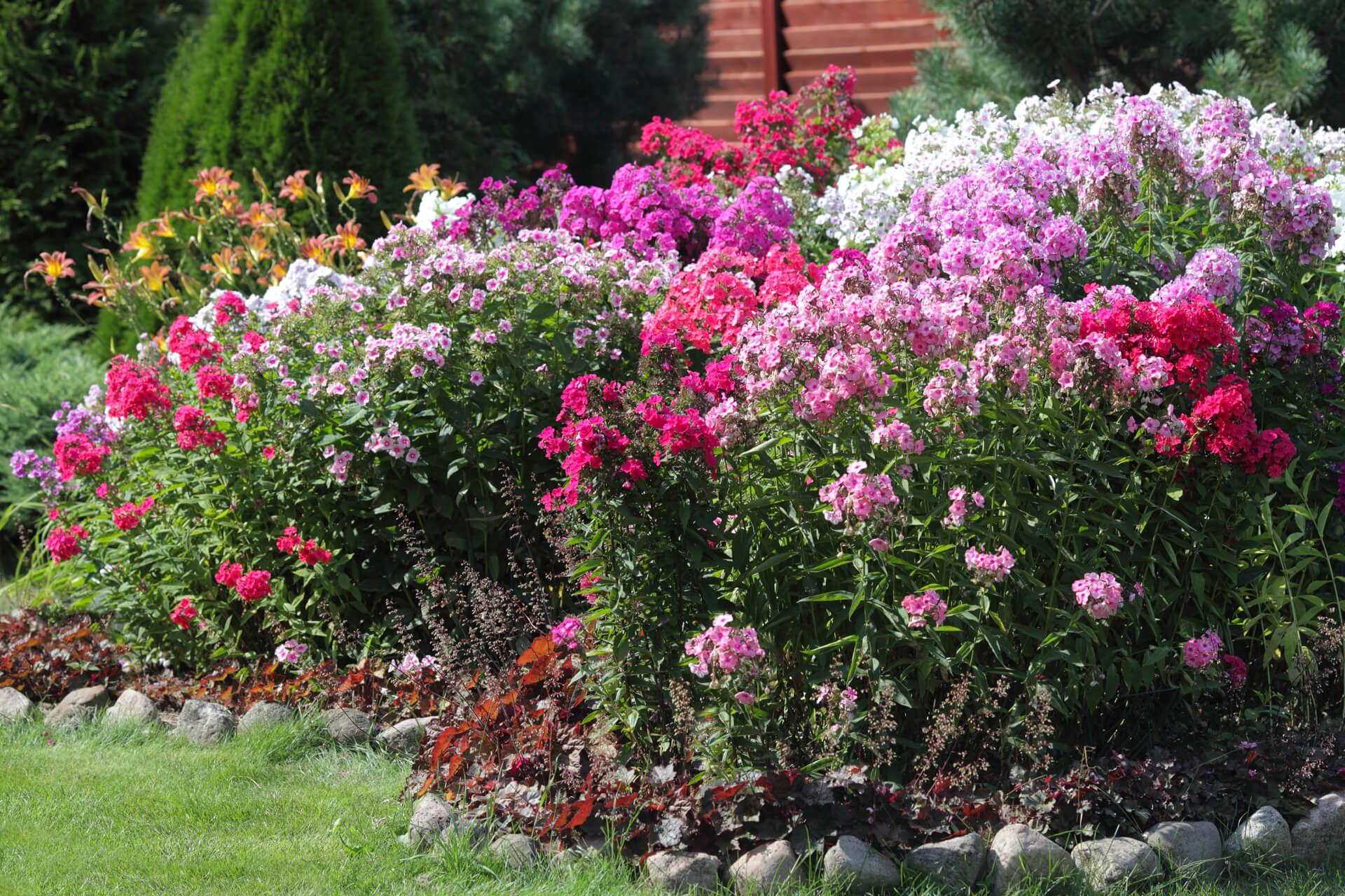 Plant ideas – care for a spirited garden