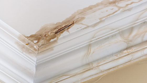 6 Signs of Water Damage in Your Ho