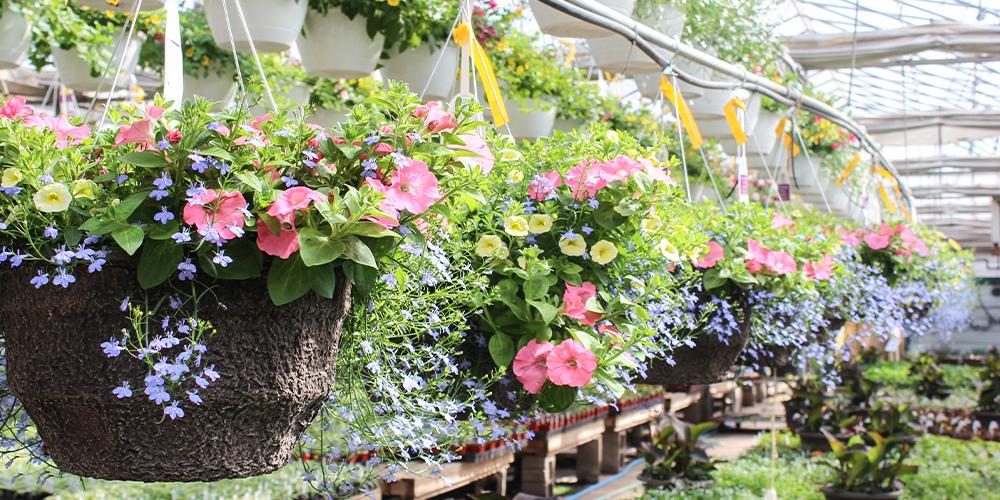 The best spring plants for your Edmonton   garden window