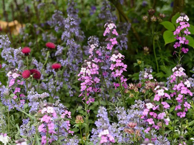 12 Key Plants for a Cottage Garden - BBC Gardeners' World Magazi