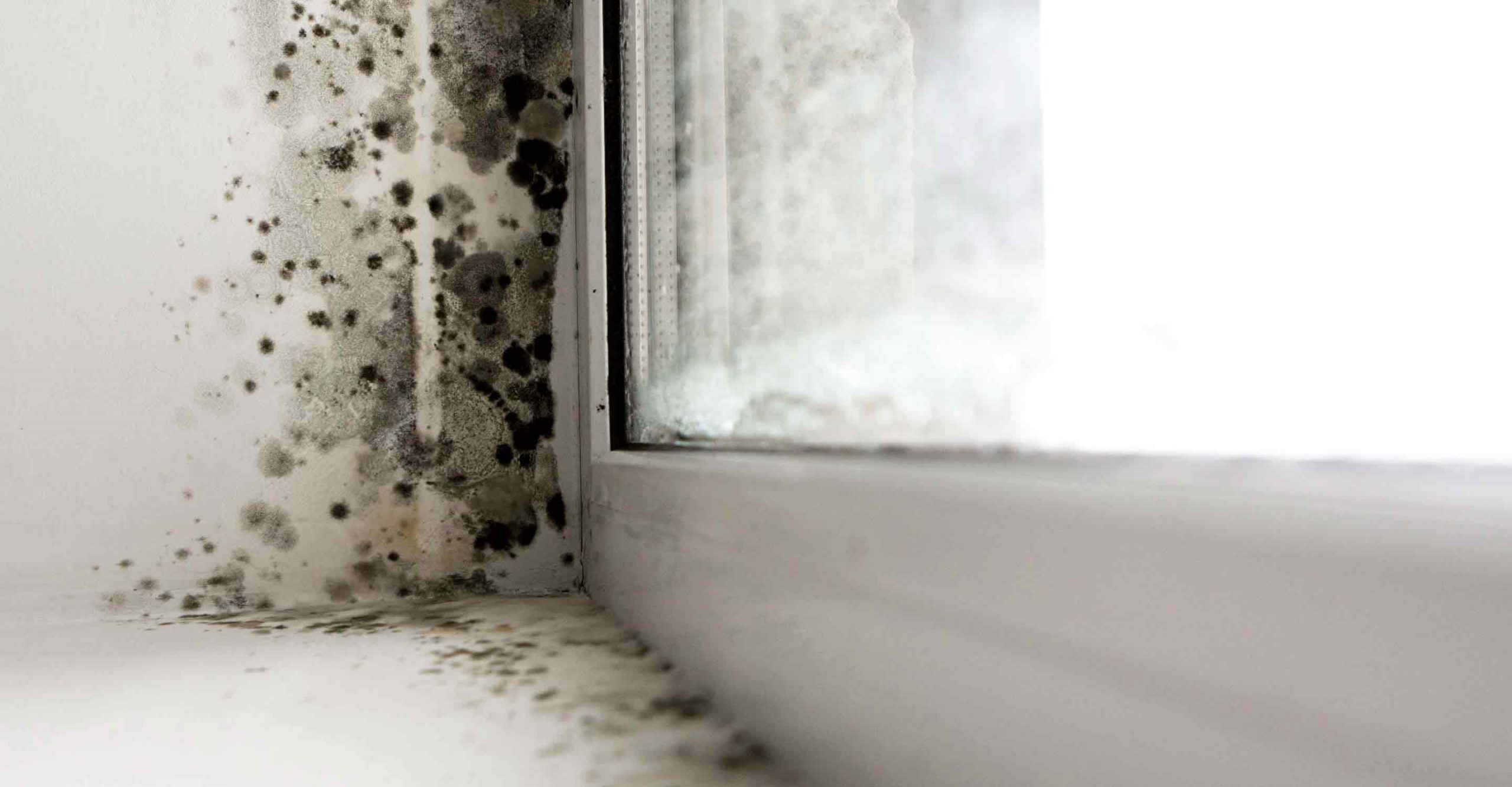 The time to act is now: 5 dangers of   household mold