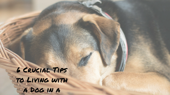6 Crucial Tips to Survive a Small Apartment with a Dog - Bark With