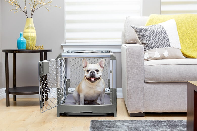 The Best Dog Products and Tips for Those Living in Small .