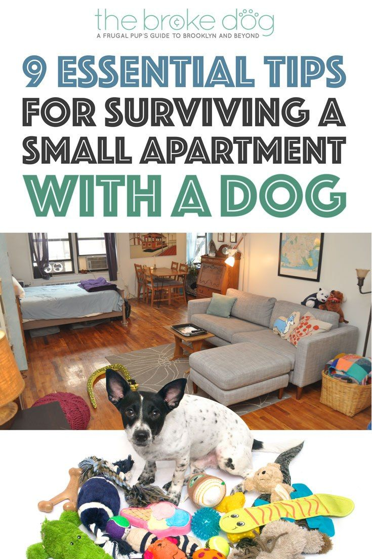 Tips for living with a dog in a small   apartment