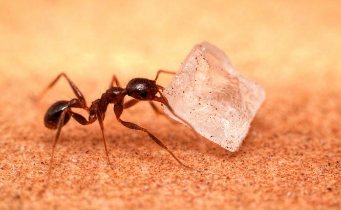 Get Rid of Sugar Ants in 3 Ste