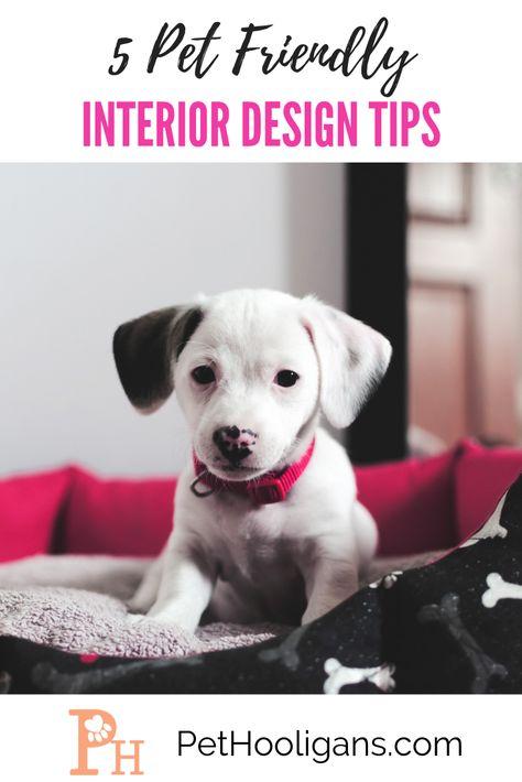 5 Pet Friendly Interior Design Tips | Pets, Dog care, Best dog .