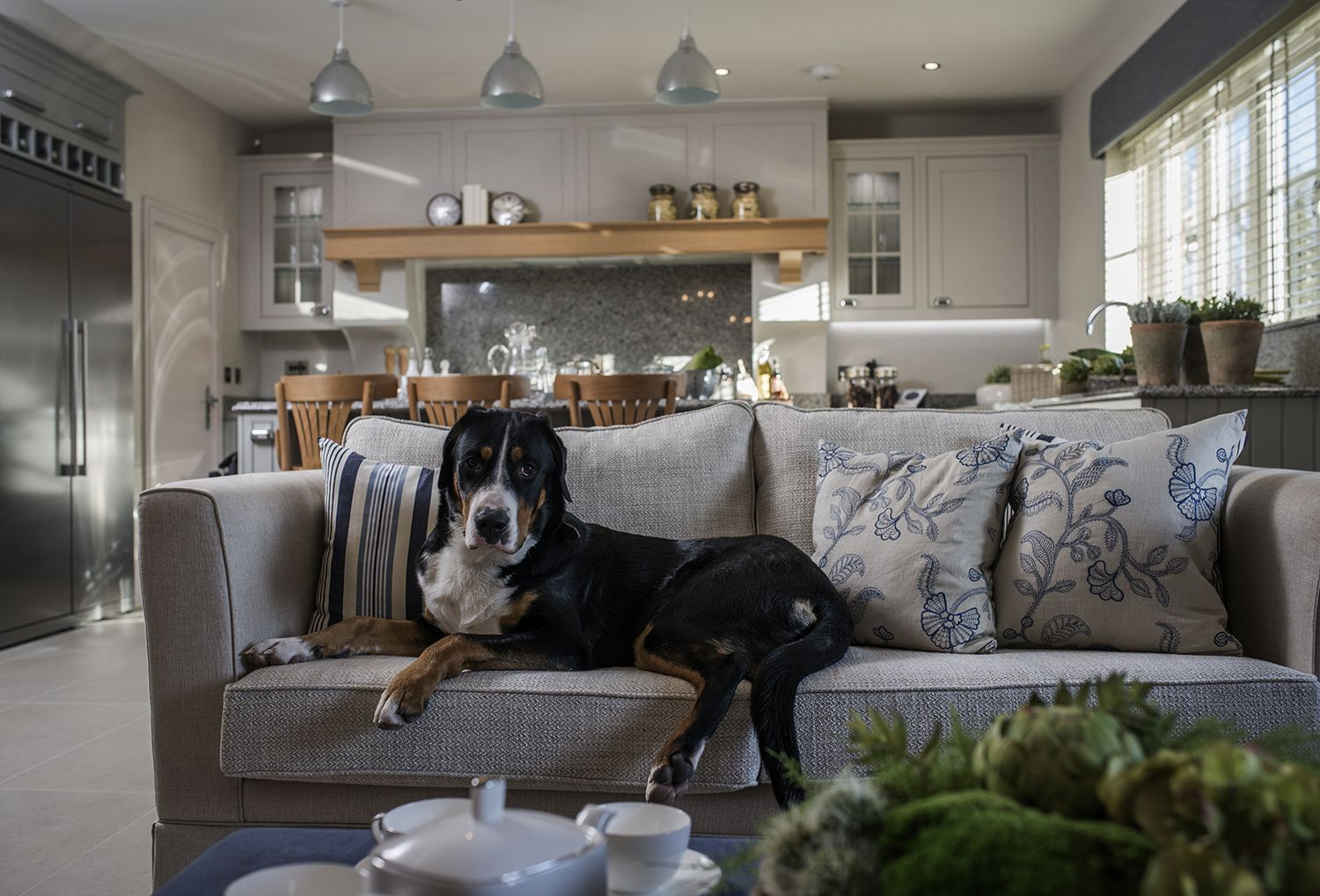 Top tips for dog-friendly interior design