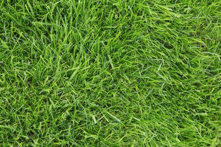 10 Best Types of Drought-Tolerant Lawn Gra