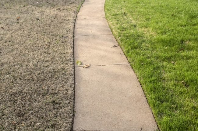 Solved! The Best Drought-Resistant Grass for Dry Summers - Bob Vi